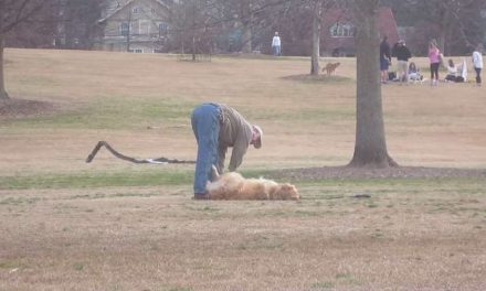Lazy Dog Doesn't Want To Leave The Park…Until His Owner Tricks Him