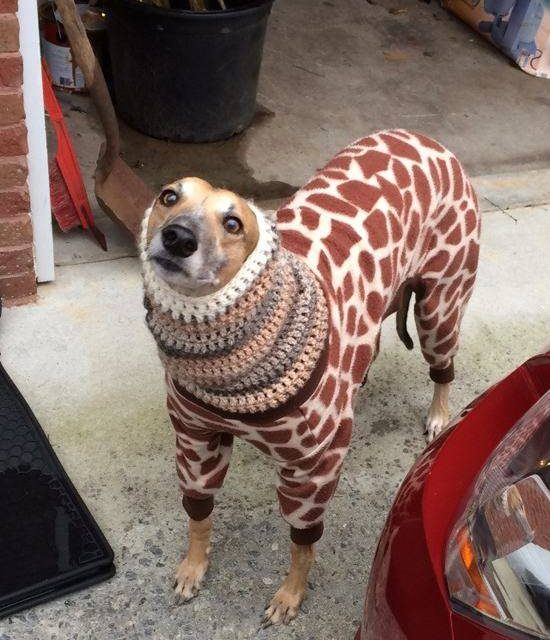 These 24 Animals Are Doing A Better Job Staying Warm Than You Are This Winter