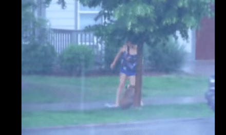 A Helpless Boxer Was Left Out In A Storm…Til A Kind Neighbor Stepped In