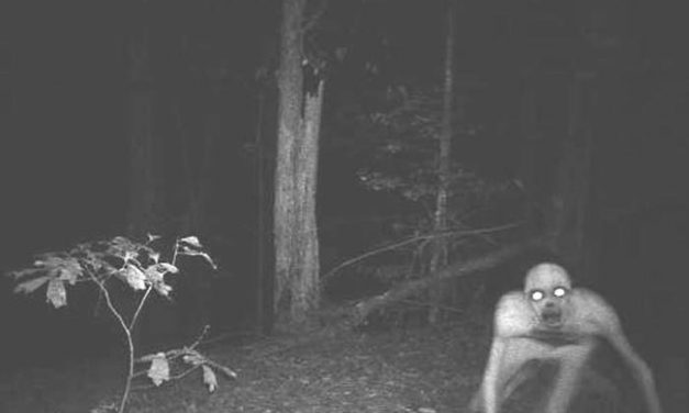 What 14 Hunters Filmed On Their Trail Cameras Will Give You Nightmares