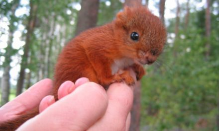 After Finding A Badly Injured Baby Squirrel, This Family Made An Adorable Decision