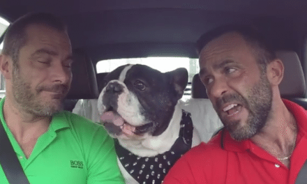 They Were Driving Around With Their Dog, When All Of A Sudden…LOL