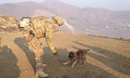 20 Animals Who Are Soldier's Best Friends