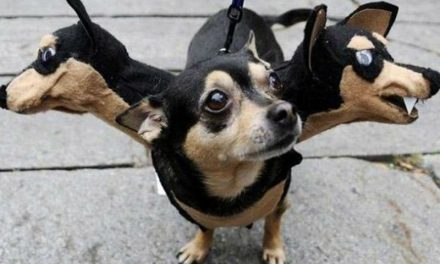 20 Hilarious Pictures Of Pets In Costumes