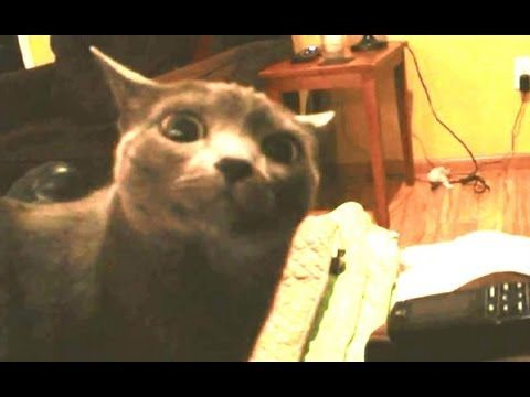 Another Dramatic Cat Looking At Camera – Dramatic Look Cat
