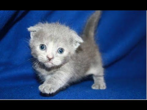 Top 10 Cutest Kittens Compilation || NEW HD