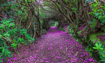 12 Breathtaking Paths That Look Like They're Straight Out Of Fairytales