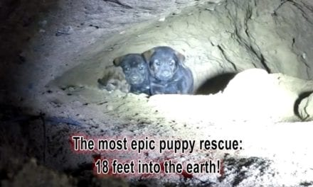 Kind Rescuer Crawls Into A Dangerous Cave To Rescue 9 Puppies!
