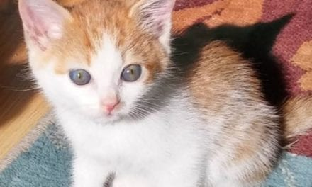 Woman Finds An Abandoned Kitten In A Box With A Heartbreaking Note