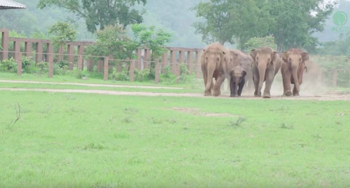 This Video Of Elephants Running To Greet Rescued Baby Elephant Is Going Viral