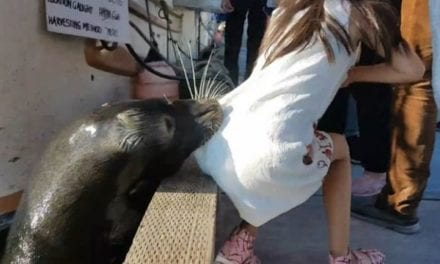 Terrifying Moment When A Little Girl Was Attacked And Dragged Underwater By A Sea Lion In Canada