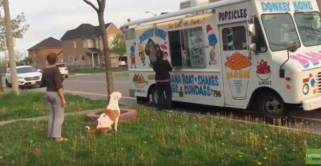 Watch This Adorable Pit Bull Wait In Line Patiently To Buy Ice Cream