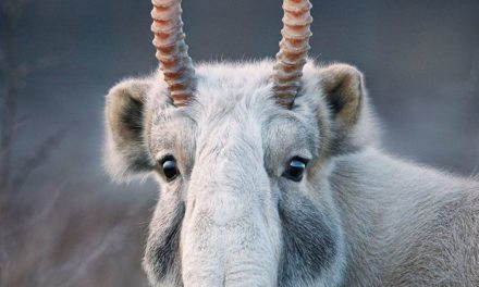 British Photographer Snaps Mind-Blowing Pictures Of Endangered Animals