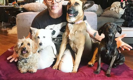 Actor Steve-O Found A Dog On The Road Adopted Him And Now They Are Best Friends