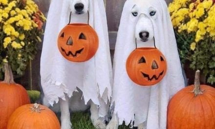 Some Dog Owners Customized Halloween Costume For Their Beloved Dogs