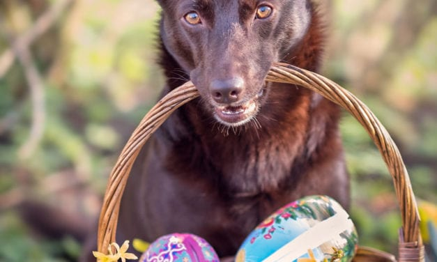 A Dog Celebrates Easter with His Family With Eggs And Love