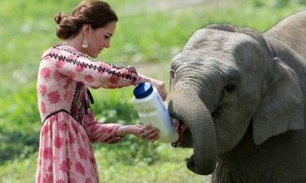 Kate Middleton: 8 Photos from the Duchess of Cambridge Along with Animals