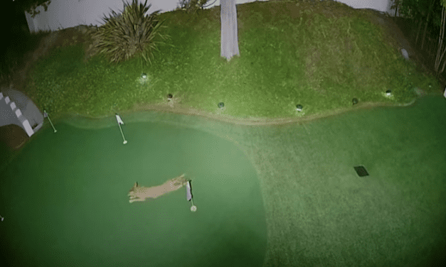 Open up Post: Hosted By A Coyote Playing Mini-Golf