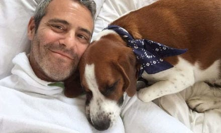 Andy Cohen Has Rehomed Wacha, His Dog Of seven Years