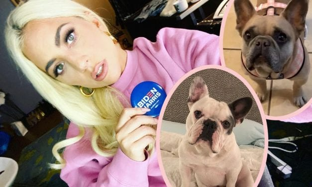 Female GaGa Breaks Stop As FBI Investigates Political Motivations Associated with Dog Kidnapping