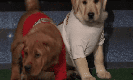 Open up Post: Hosted By Young puppies Predicting The Super Dish