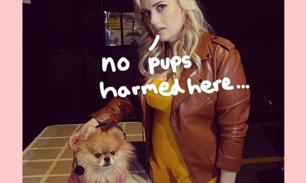 Digital rebel Wilson's Pooch Ideal Faces Accusations Associated with Animal Abuse Upon Twitter