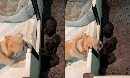 Open up Post: Hosted From the Bulldog Daddy Capable to Meet His Young puppies